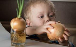 Лук в детском прикорме